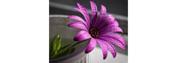 Цветы купить интернет-магазин в Рязани. Большой выбор и высокое качество цветов!