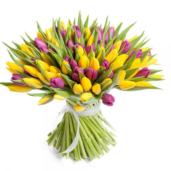 101 желто-сирен. тюльпан