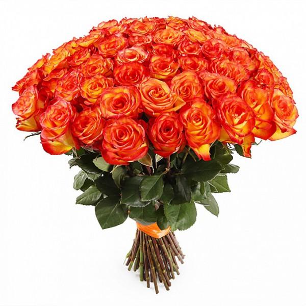 101 роза Хай Мэджик.