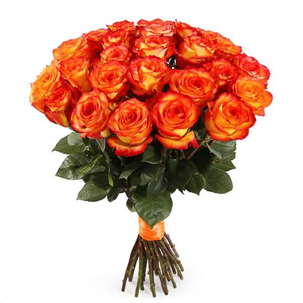 25 роз Хай Меджик