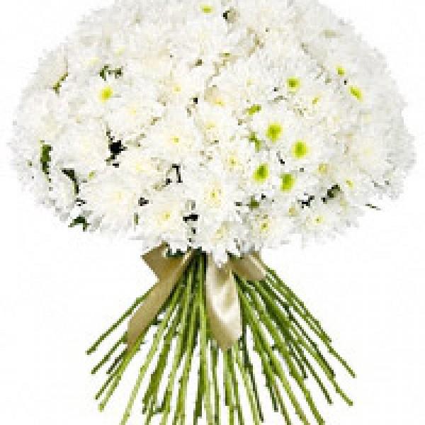 Белые хризантемы МИКС