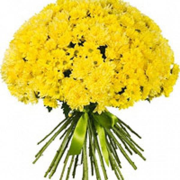 Желтые хризантемы МИКС