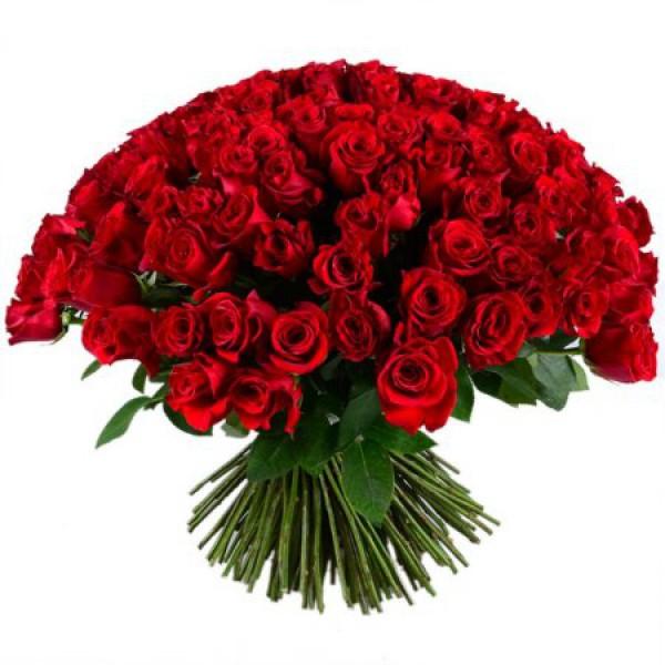 201 бордовая роза
