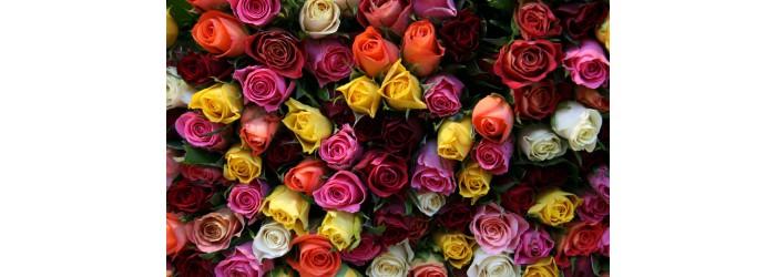 Купить розы в Рязани с доставкой по городу и области. Большой выбор букетов и композиций на сайте!