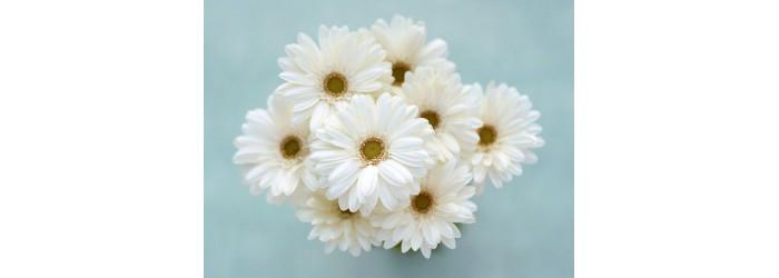 Где купить цветы в Рязани с бесплатной доставкой? Свежие цветы и подарки к каждому заказу!